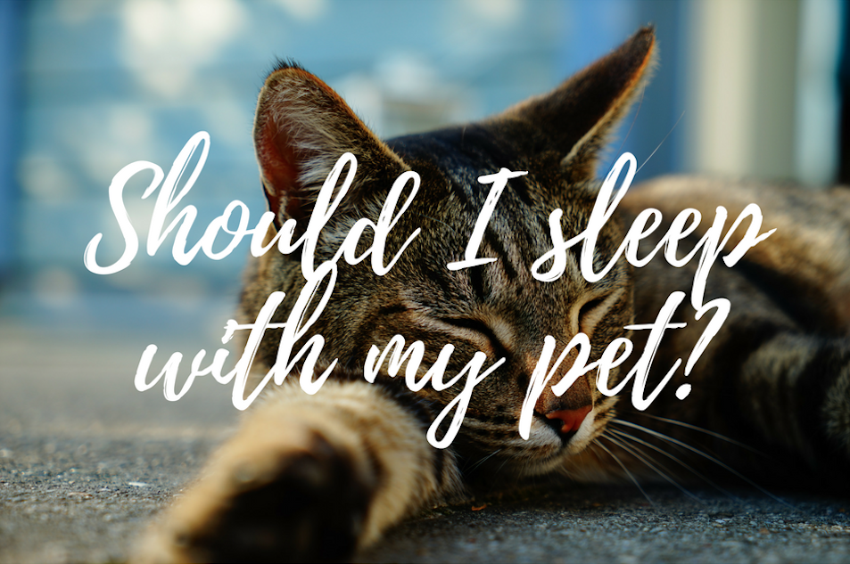 sleeping with your pet