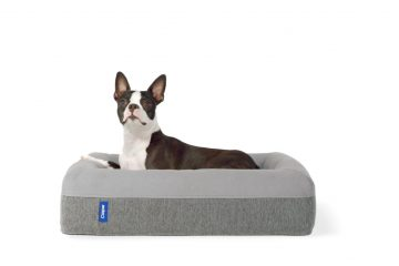 casper dog bed review